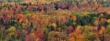 Vermont_fall_foliage_hogback_mountain chensiyuan